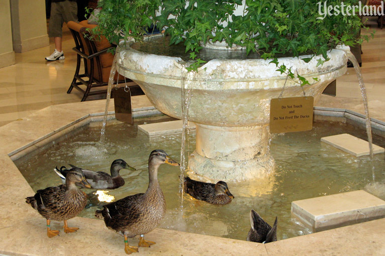 The Peabody Ducks of Orlando